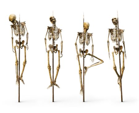 Group of skeletons impaled on spiked sticks on a isolated white background. 3d rendering Imagens