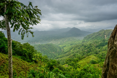 Colombian Jungle Landscape Stock Photo