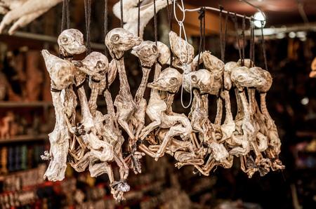 Llama fetuses Stock Photo