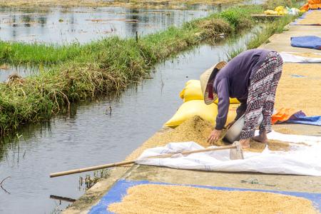 Women drying rice in Hoi An Stock fotó