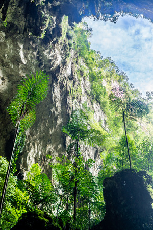 Mulu National Park -