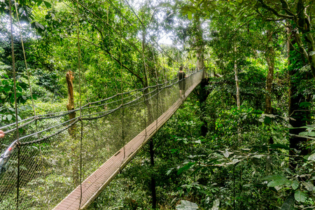 Mulu National Park - Canopy Walk