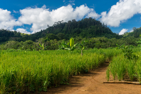 カンボジアの Bunung 村に 18 キロのハイキングします。