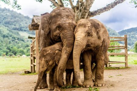 치앙마이, 태국 코끼리 자연 공원