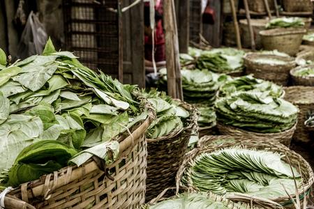 Mandalay, Myanmar - multiple bins of green lettuce
