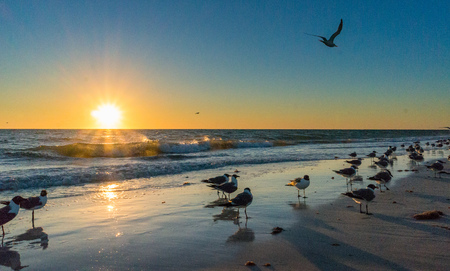 Seagulls on the beach sand during sunset