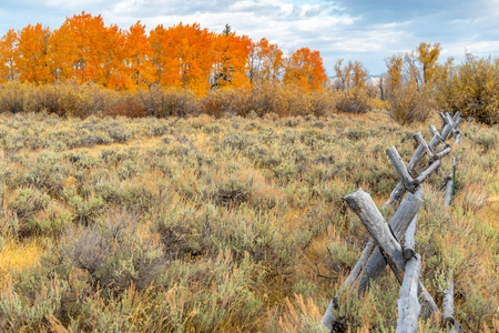 Autumn foliage in The Grand Tetons National Park, Wyoming