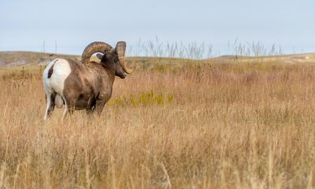 Visiting the Badlands in South Dakota in September 2018