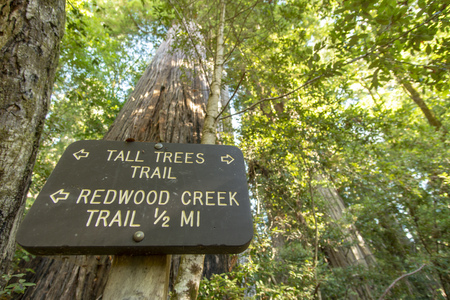 Redwood National and State Park in October - Northern California 版權商用圖片