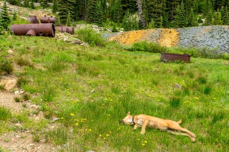 Dog resting in grassy field