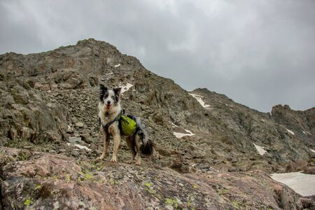 Dog Hiking Rocky Mountains with Backpack Stock Photo