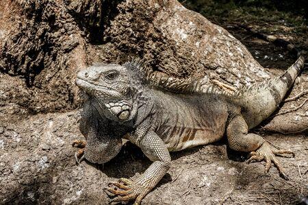 Parque de las Iguanas Stock Photo
