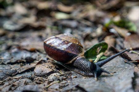 Mulu National Park - Slug