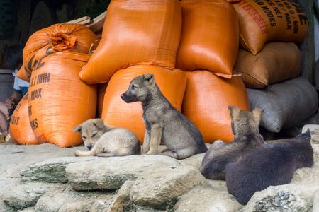 Homestay with Hmong People - puppies at sleep