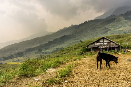 Homestay with Hmong People - dog in a field