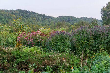 Field of flowers on farm 写真素材 - 138834773