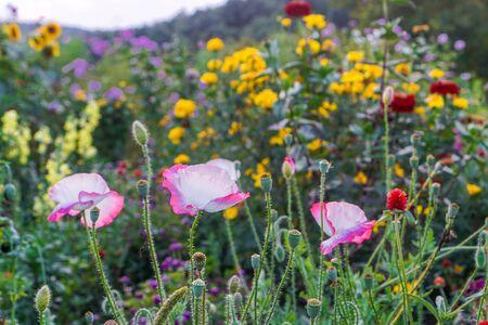 Field of flowers on farm 写真素材 - 138834775