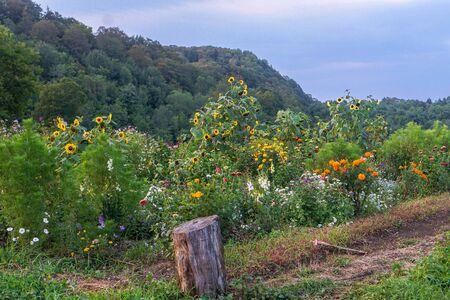 Field of flowers on farm 写真素材 - 138834777