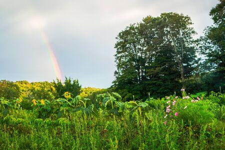 rainbow Banco de Imagens
