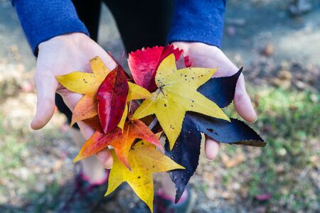 fall colorful leaves in hand