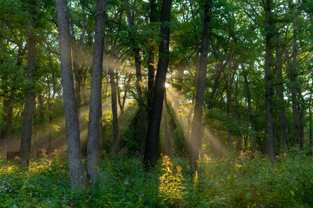 Sun Rising in Mac Queen Forest Preserve 写真素材