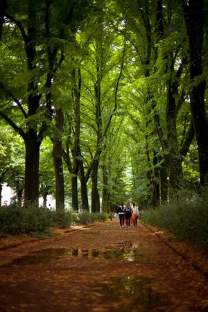 A trio walk a tree lined boulevard