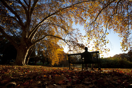 Contemplation on a park bench