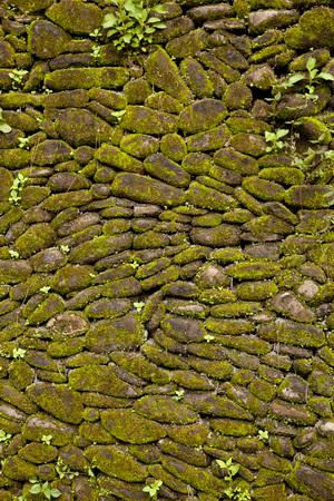 Grünes Moos bedeckt Steinmauer Hintergrund. Standard-Bild - 56004468