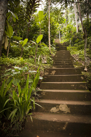 Steps lead up a steep hill into the jungle.