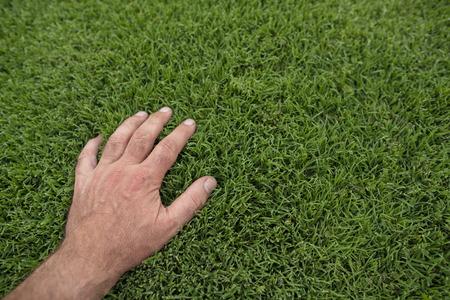 Hand on lush green lawn