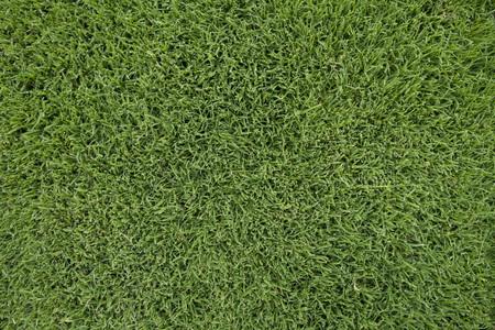 Lush green lawn background