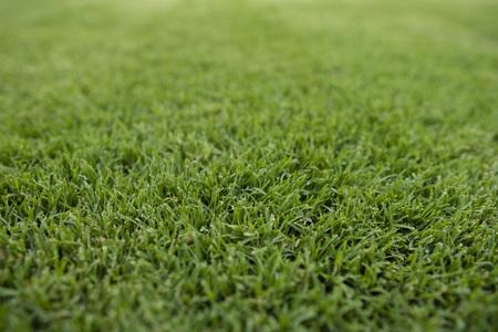Lush green lawn low angle