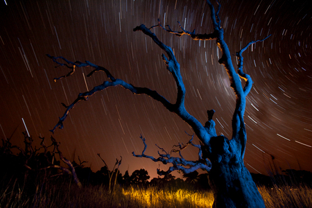 Blue Tree star trails Southern Sky