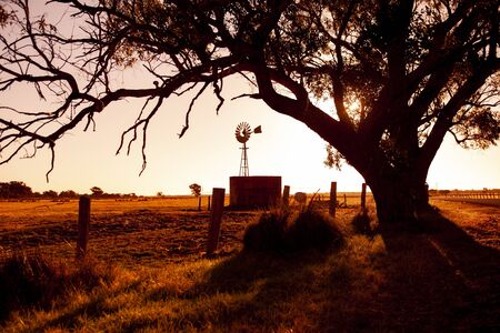 A large tree, a fence and a windmill against a rural Sunset.