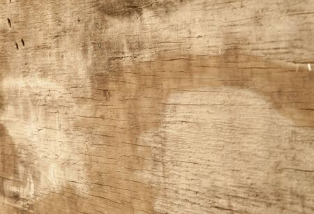 splintered: background image featuring weathered plywood with cracks and wormholes