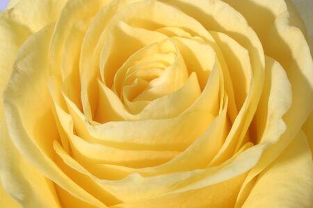 Il colore giallo è aumentato Archivio Fotografico - 244186