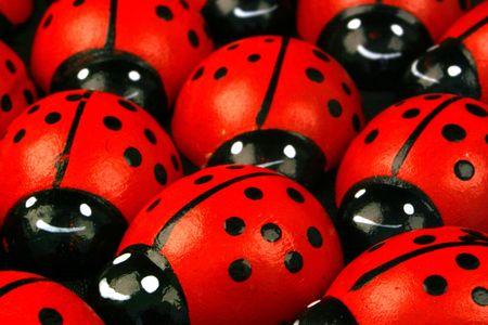 Flock of ladybugs Reklamní fotografie - 251986