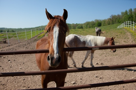 Horses behind a fence.