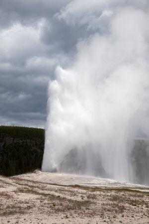 Old Faithful geyser shooting water towards the sky.