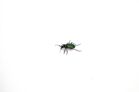 A green beetle isolated on a white background.