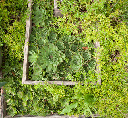A view of the plant hens and chicks.