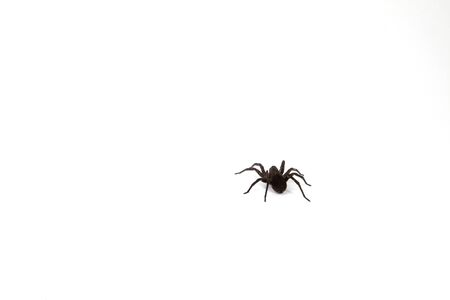 A spider isolated on a white background.