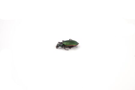 A green beetle on a white background.