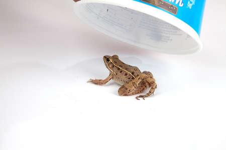 A frog isolated on a white background.