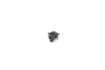 A beetle isolated on a white background.