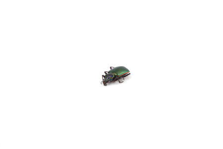 A beetle isolated on a white background. 版權商用圖片 - 37481195
