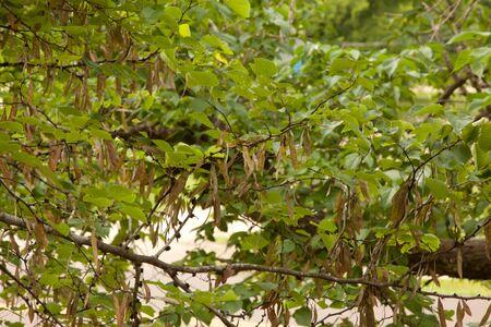 Leaves on a tree.