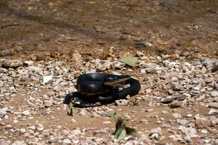 A black snake on the beach of a river.