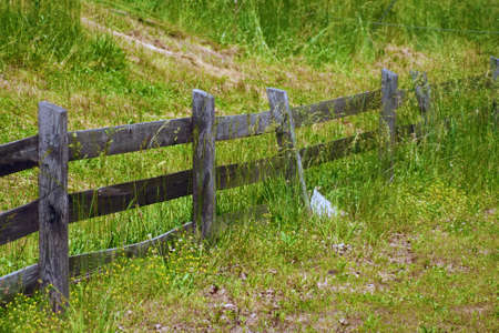 A portion of a wooden fence among grass.