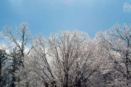 Ice covered trees with a blue sky background. Reklamní fotografie